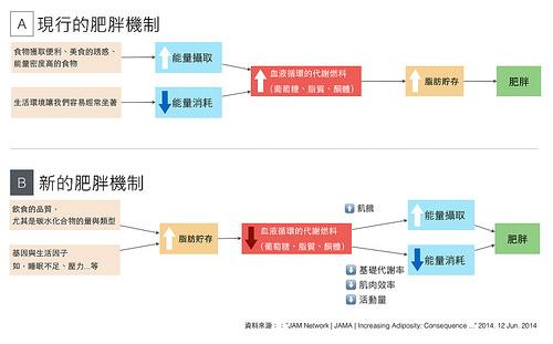 傳統以及新觀念的肥胖機制圖表